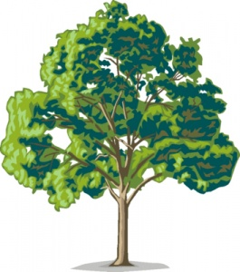 Oak-tree-tree-clip-art-free-clipart-images-clipart-image